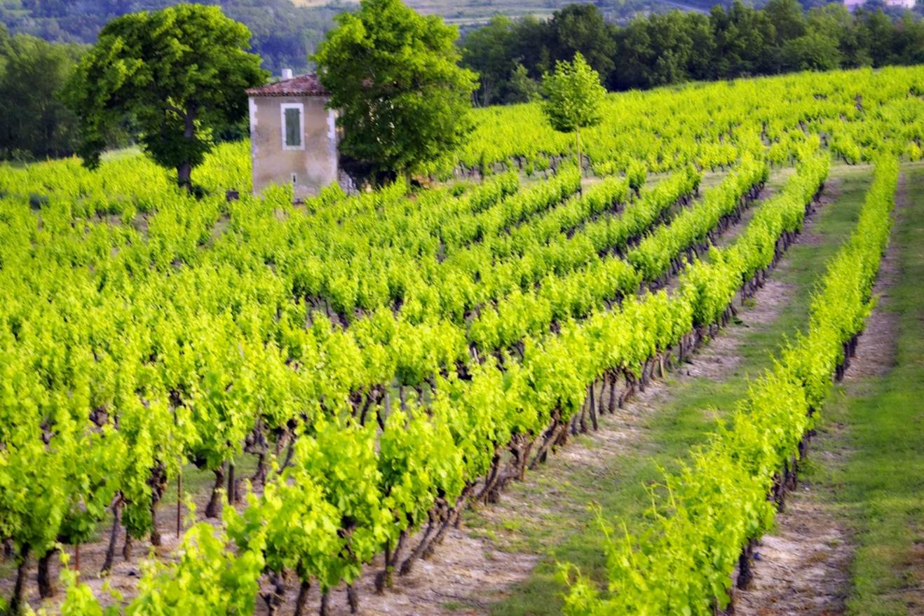Wine Country Tours Loire Valley Vineyards Image